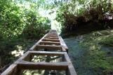 Ladders are Plentiful